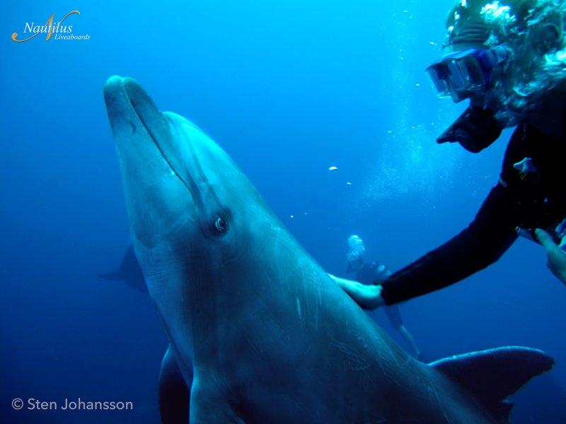 Socorro-dolphin-001