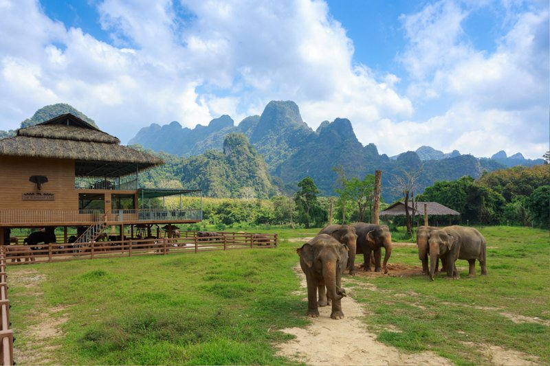 Ethical Elephant Experience at Elephant Hills Luxury Tented Camp Khao Sok National Park Thailand - no Elephant Riding or Trekking
