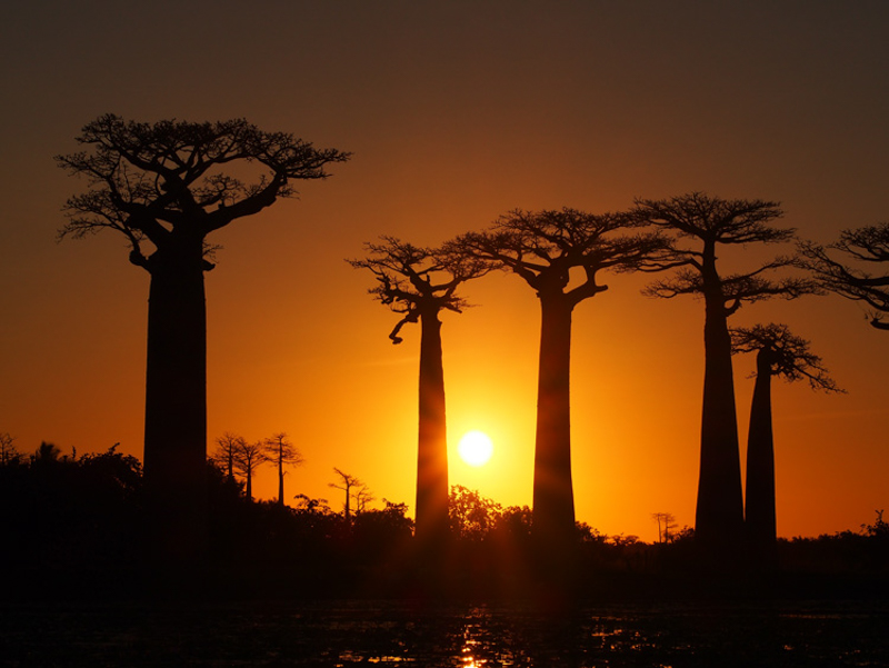 Day 02_avenue_of_baobabs