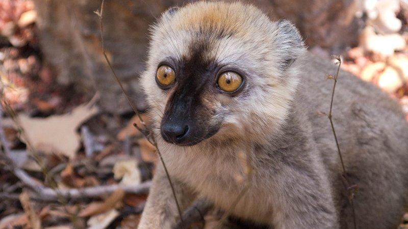 Day 05_Lemur-kirindy