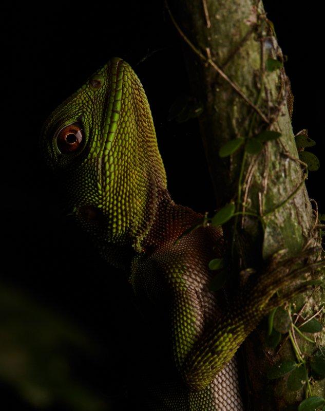 Images courtesy Tropic Eco Tours, Amazon Sani Lodge Tour, -12