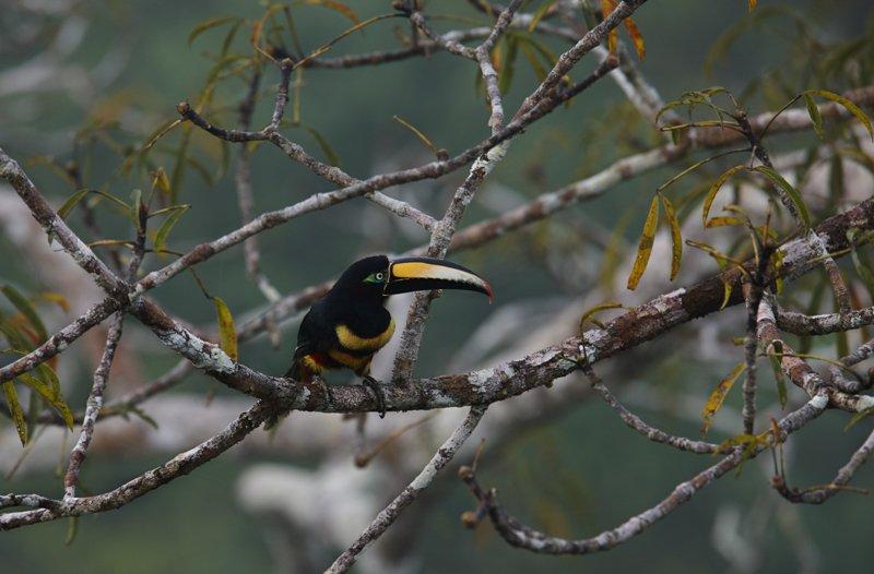 Images courtesy Tropic Eco Tours, Amazon Sani Lodge Tour, -16