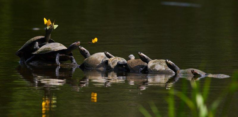 Images courtesy Tropic Eco Tours, Amazon Sani Lodge Tour, -18
