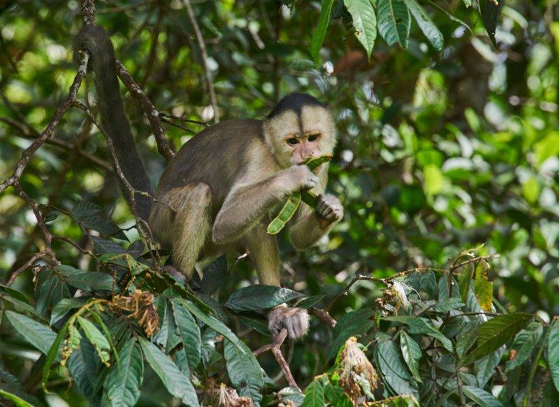 Images courtesy Tropic Eco Tours, Amazon Sani Lodge Tour, -19