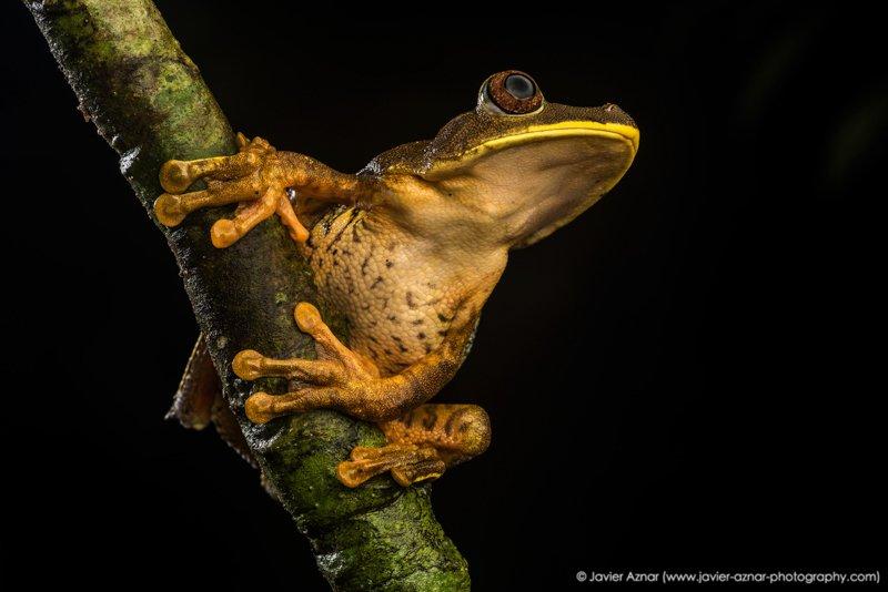 Images courtesy Tropic Eco Tours, Amazon Sani Lodge Tour, -23