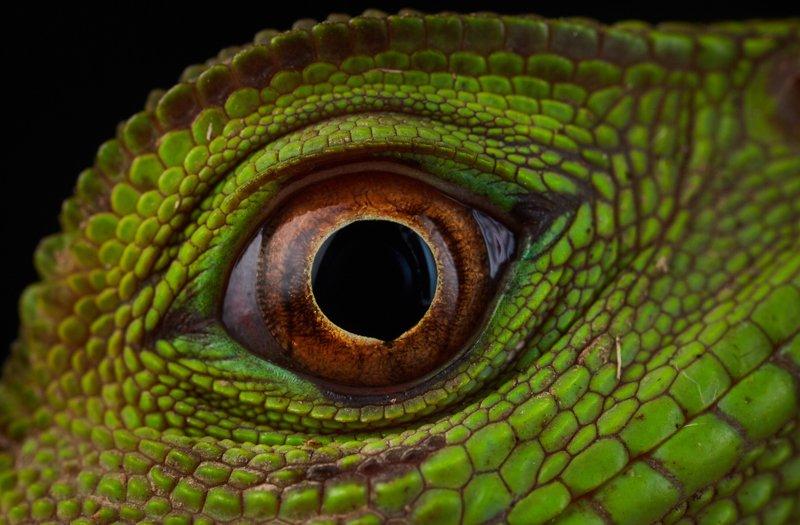 Images courtesy Tropic Eco Tours, Amazon Sani Lodge Tour, -24