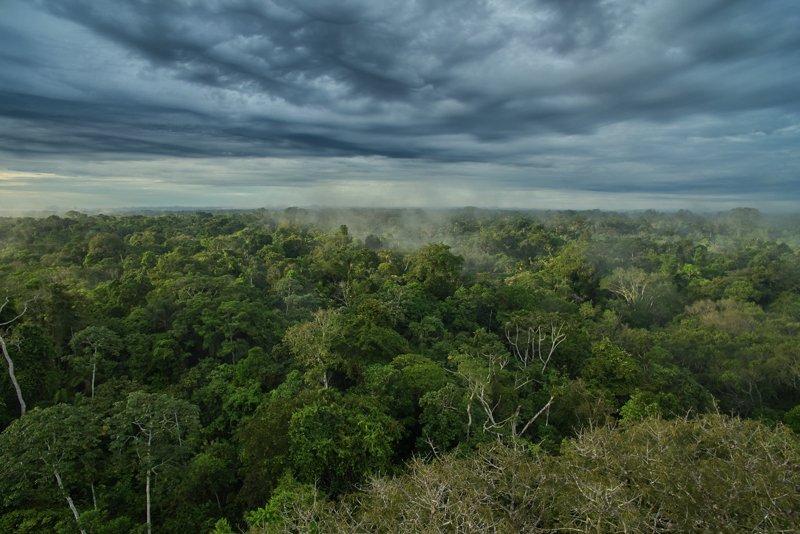 Images courtesy Tropic Eco Tours, Amazon Sani Lodge Tour, -6