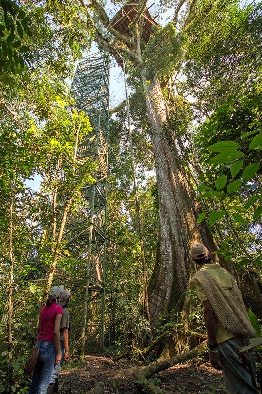 Images courtesy Tropic Eco Tours, Amazon Sani Lodge Tour, -8