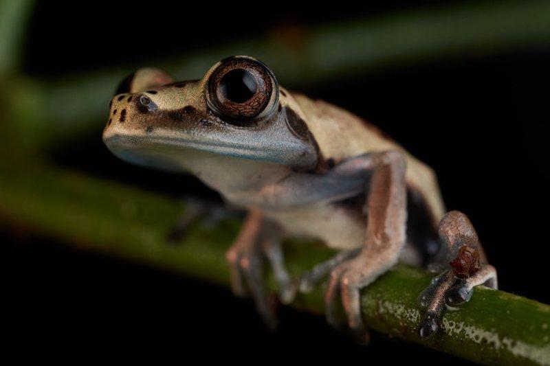 Images courtesy Tropic Eco Tours, Amazon Sani Lodge Tour, -9