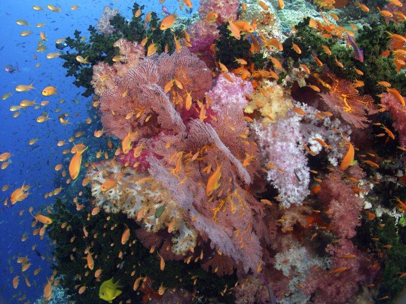 Image courtesy Nai'a-Cat-Holloway-soft-reef