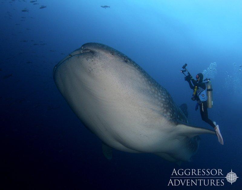 Galapagos Aggressor III diving-1