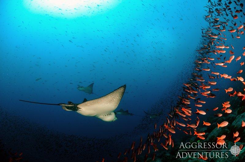 Galapagos Aggressor III diving-12