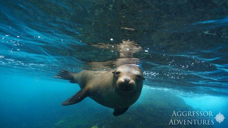 Galapagos Aggressor III diving-13