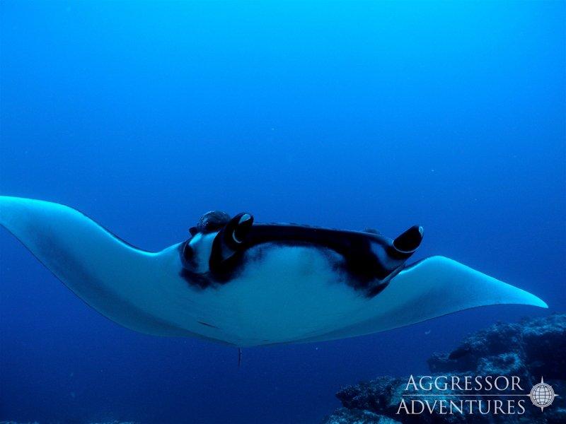 Galapagos Aggressor III diving-16