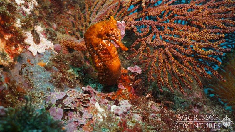 Galapagos Aggressor III diving-17