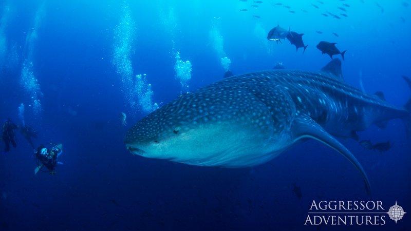 Galapagos Aggressor III diving-18