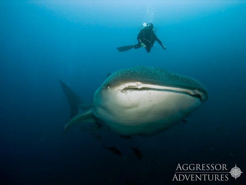 Galapagos Aggressor III diving-2