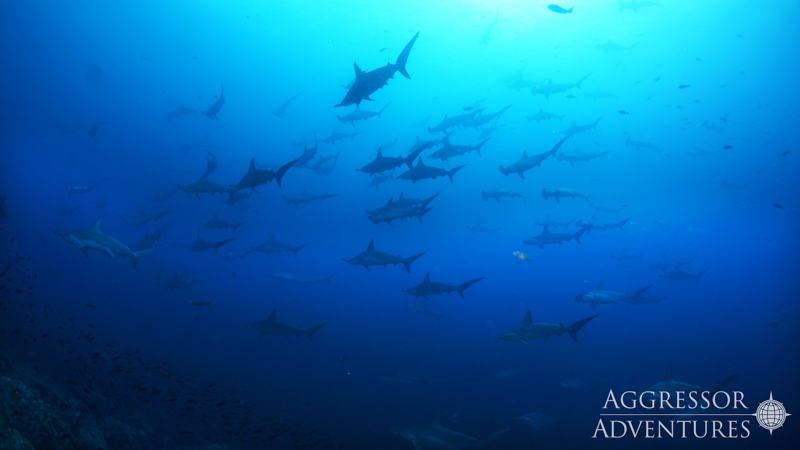 Galapagos Aggressor III diving-21