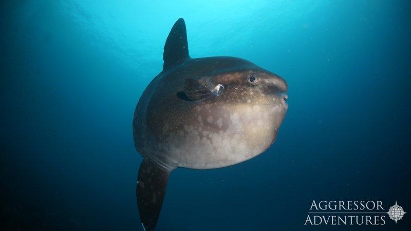 Galapagos Aggressor III diving-22