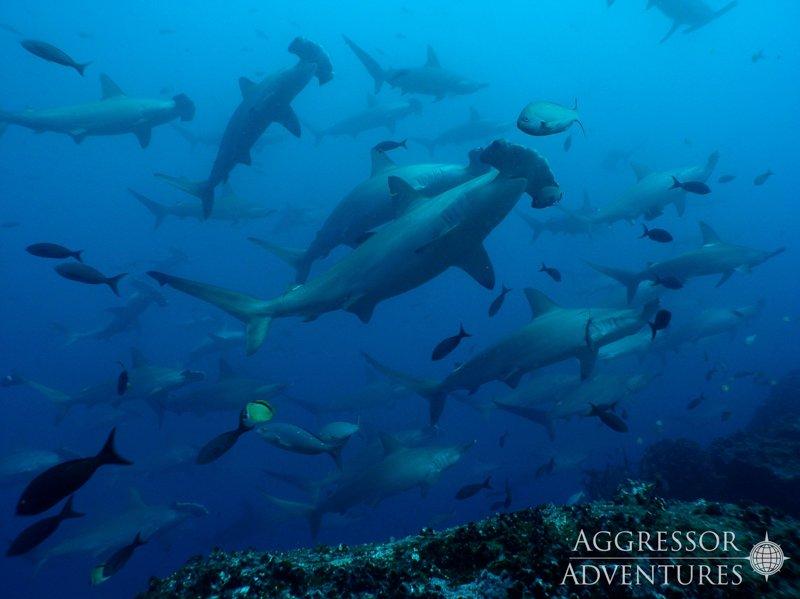 Galapagos Aggressor III diving-3