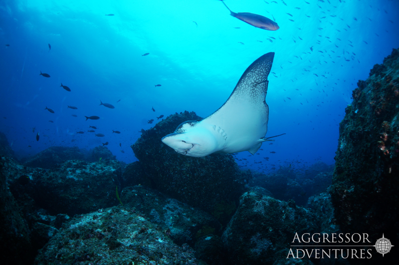 Galapagos Aggressor III diving-5