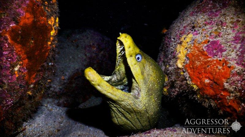 Galapagos Aggressor III diving-6