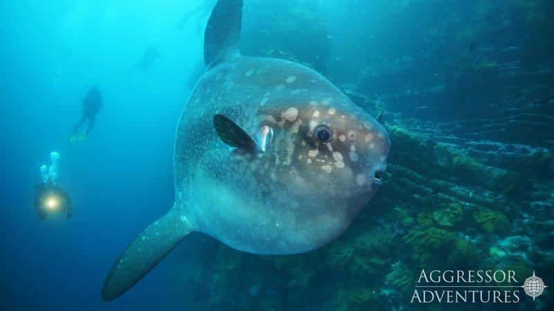 Galapagos Aggressor III diving-7