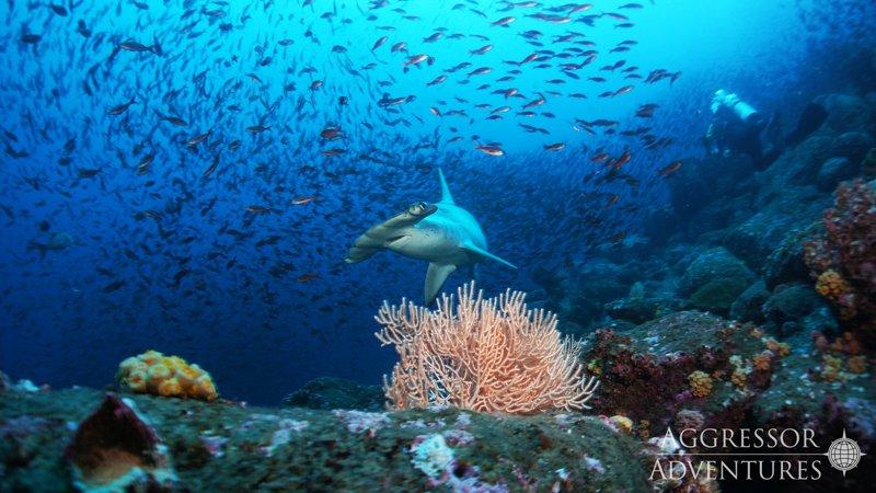 Galapagos Aggressor III diving-8