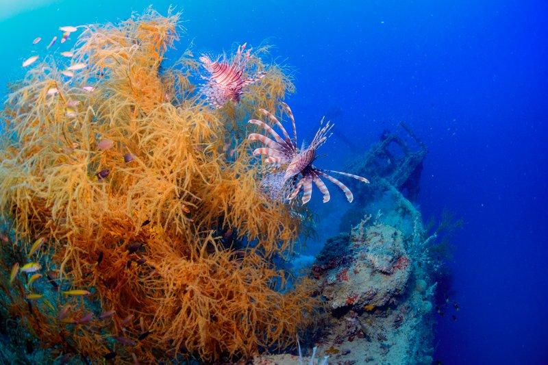 Sangat Island Resort - wreck diving-1