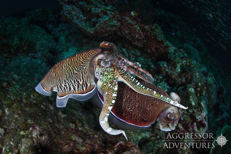 Thailand Aggressor underwater-12
