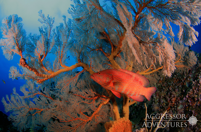 Thailand Aggressor underwater-13