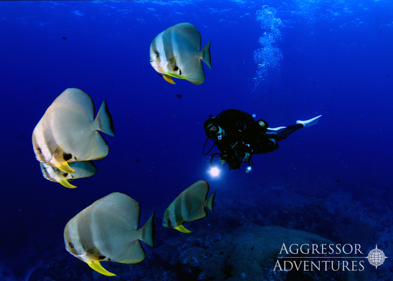 Thailand Aggressor underwater-2
