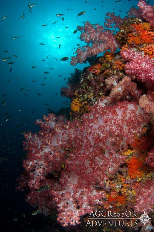 Thailand Aggressor underwater-3