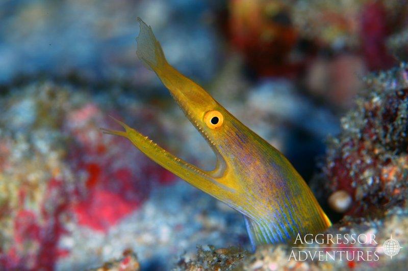 Thailand Aggressor underwater-4
