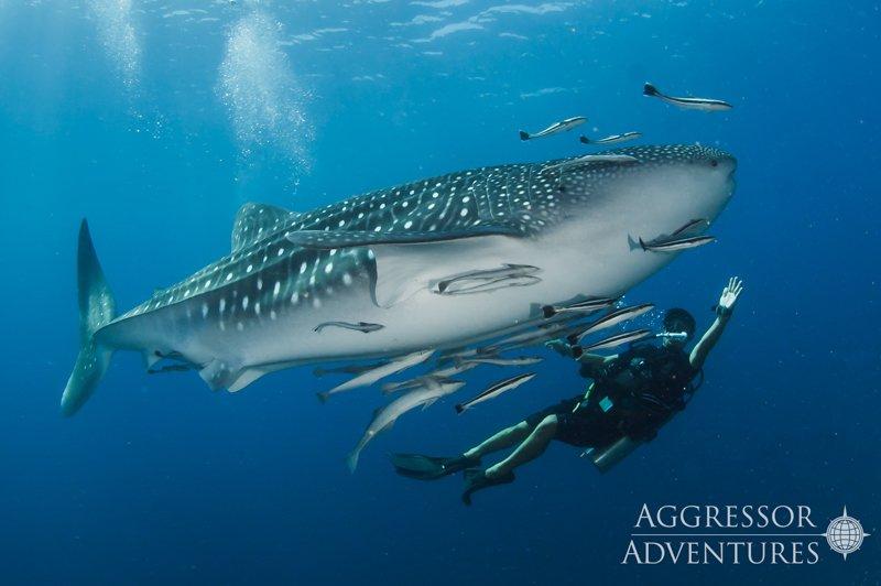 Thailand Aggressor underwater-6