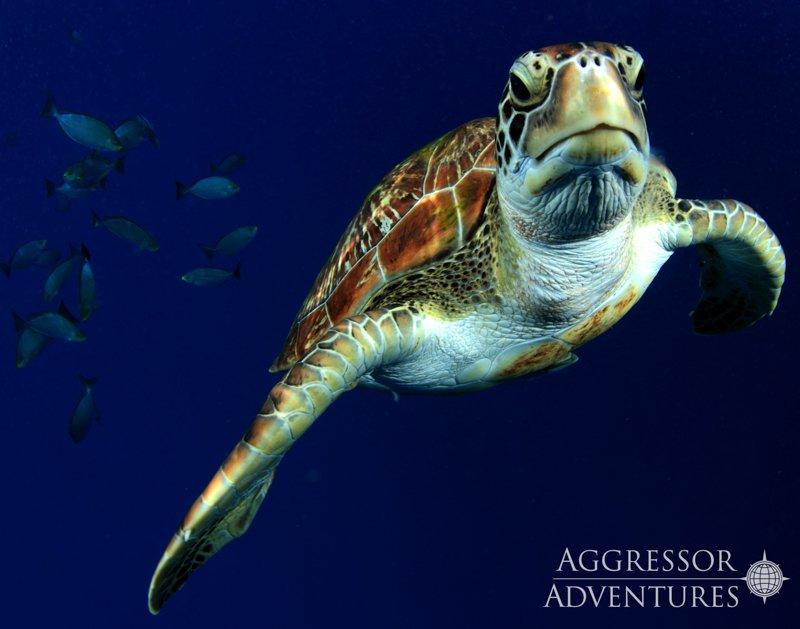 Thailand Aggressor underwater-7