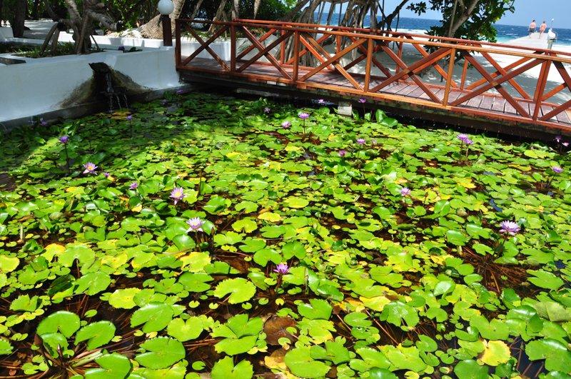 Angaga Island Resort _ Spa