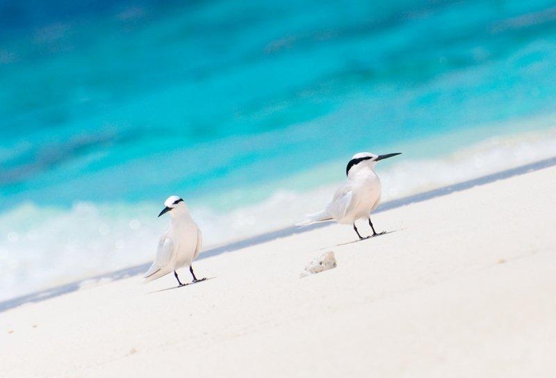 Angaga Island Resort _ beach01