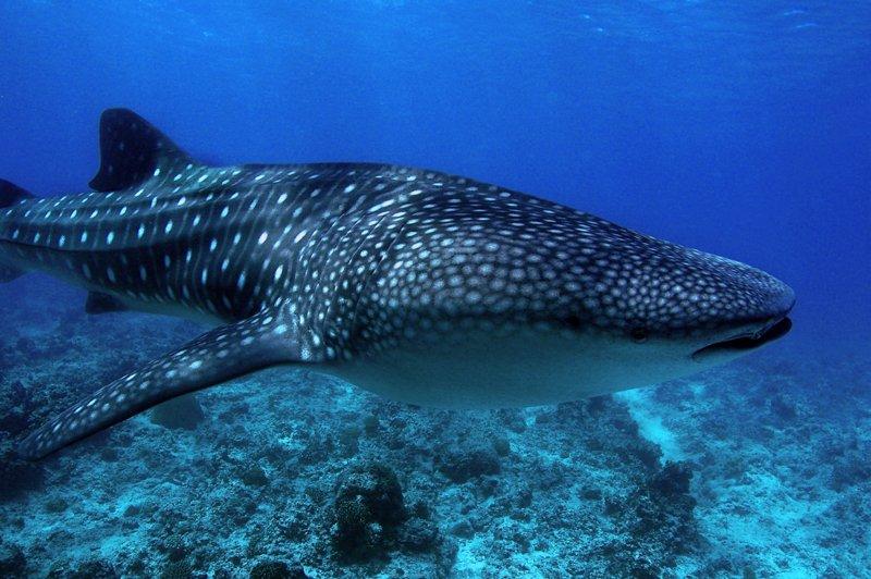Angaga Island Resort _ diving02