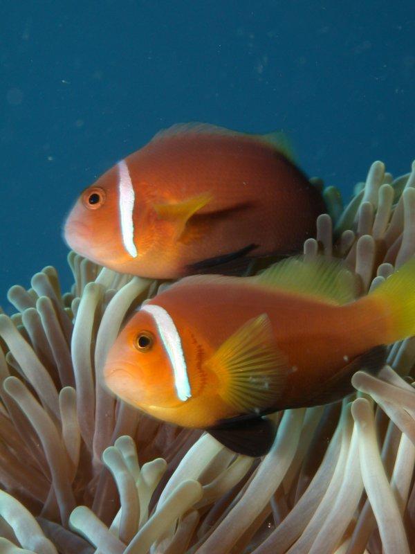 Angaga Island Resort _ diving05