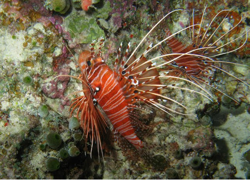 Angaga Island Resort _ diving06