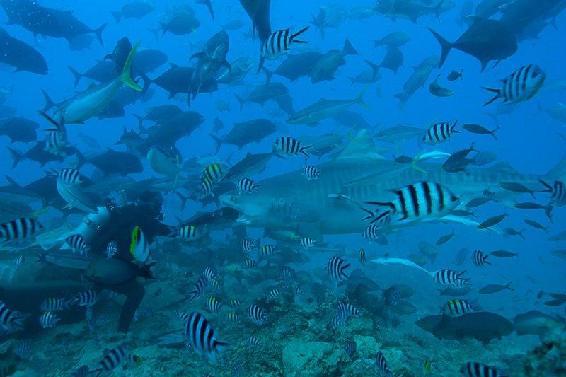 Beqa Lagoon Resort-15