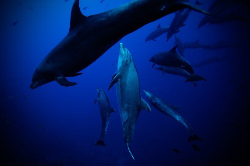 Dolphins 1 - Jorge Hauser