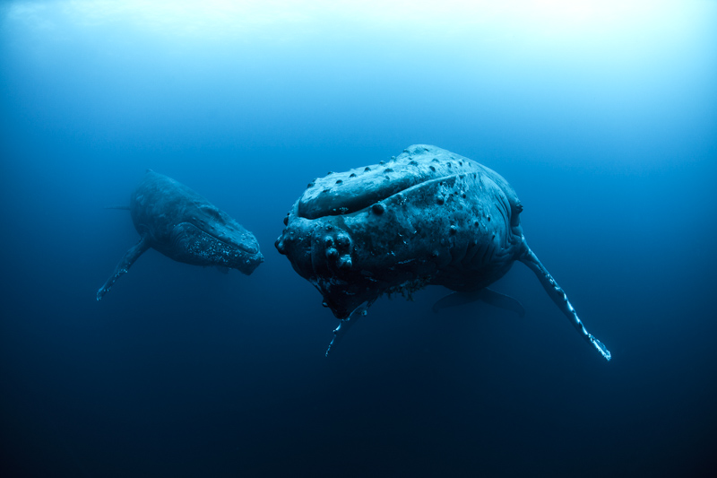 Humpbacks - Rodigo Friscione