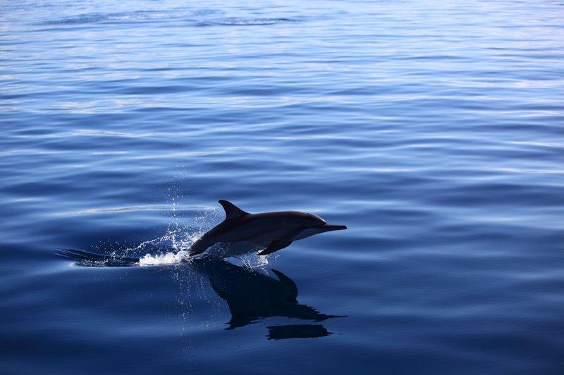 Jean-Michel Cousteau Resort-16