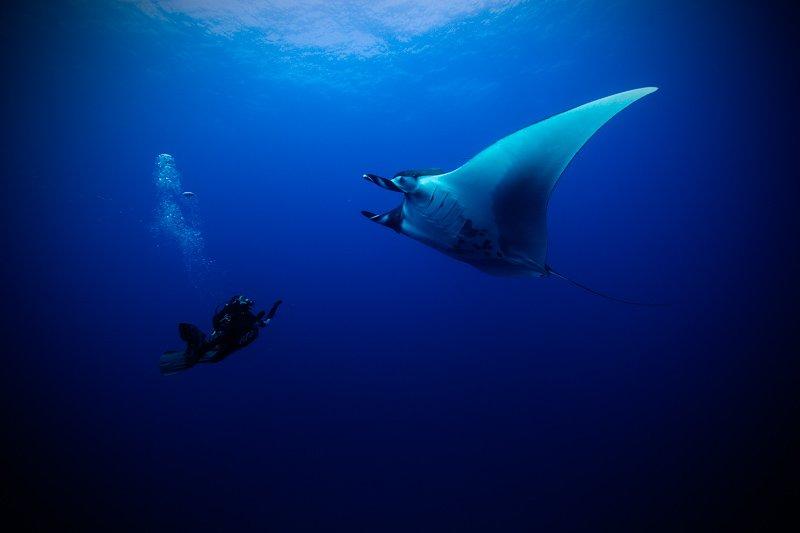 Manta and Diver 2 - Jorge Hauser