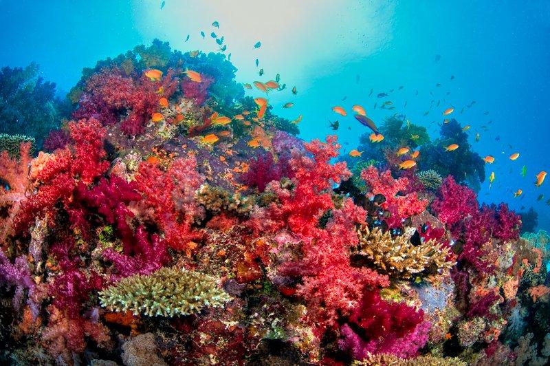 Paradise Taveuni Resort-19