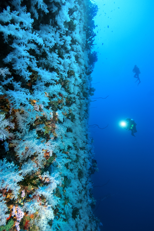 Paradise Taveuni Resort-20