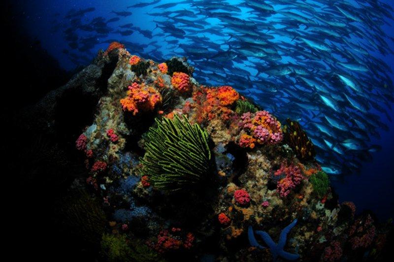 Philippines Siren Central Visayas diving-2