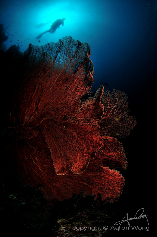 Philippines Siren Central Visayas diving-3